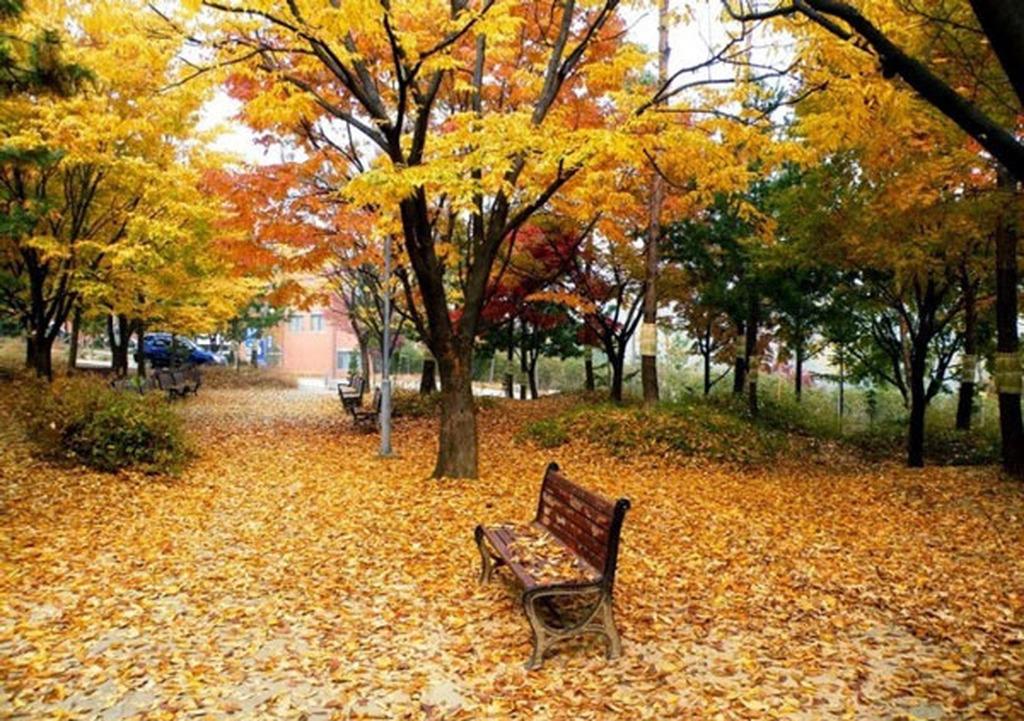 Αποτέλεσμα εικόνας για φωτογραφίες φθινόπωρο