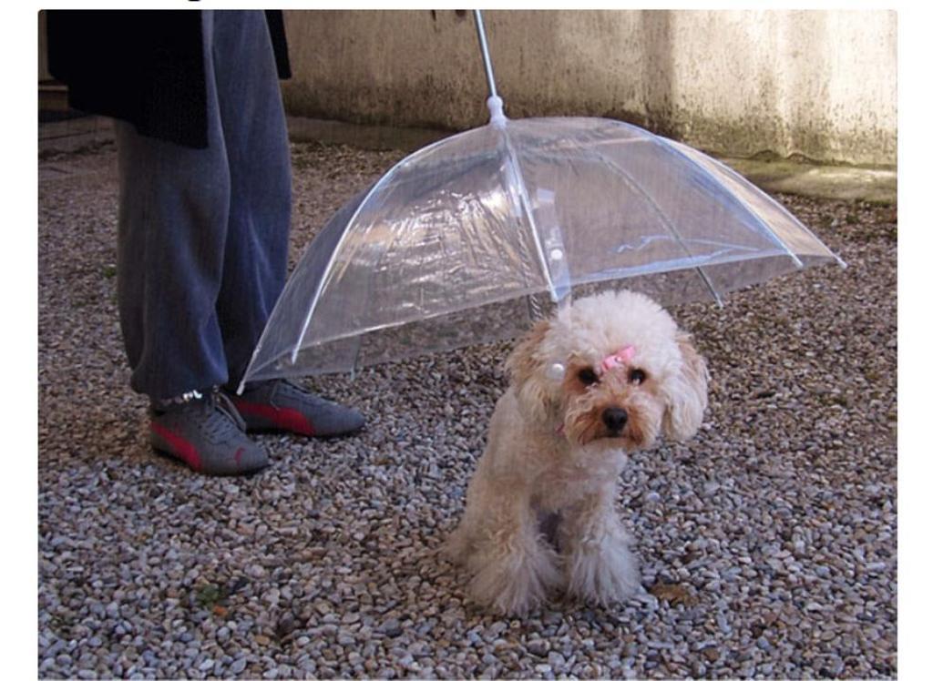 Ομπρέλες που θα σας κάνουν να... θέλετε τη βροχή (pics)  026a73d815b