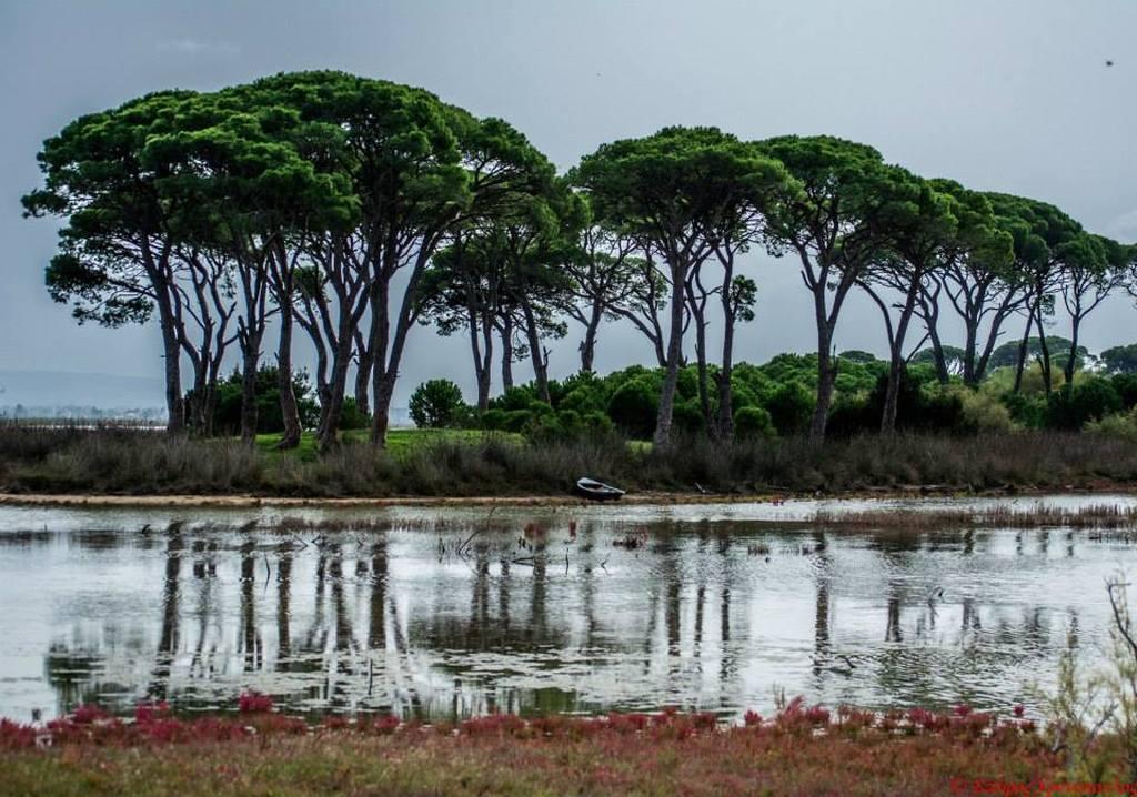 Αποτέλεσμα εικόνας για Δάσος Στροφυλιάς και παραλία Καλογριάς