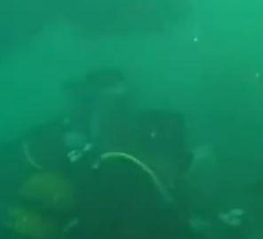 Δείτε τον μεγαλύτερο υποβρύχιο γάμο που έχει γίνει ποτέ (video)