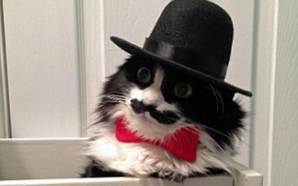 διαδικτυακό site γνωριμιών για γάτες