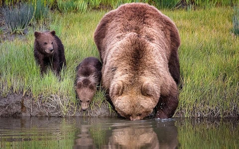 Αποτέλεσμα εικόνας για μαμα αρκουδα