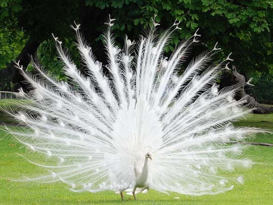 Λευκά κορίτσια μεγάλο πουλί