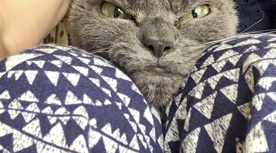 Γάτα σε απευθείας σύνδεση ιστοσελίδα dating
