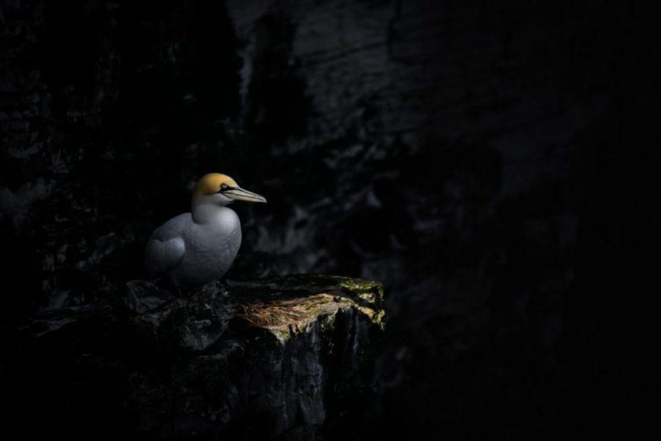 μαύρο πουλί φωτογραφίες μουXNXX μουβιές