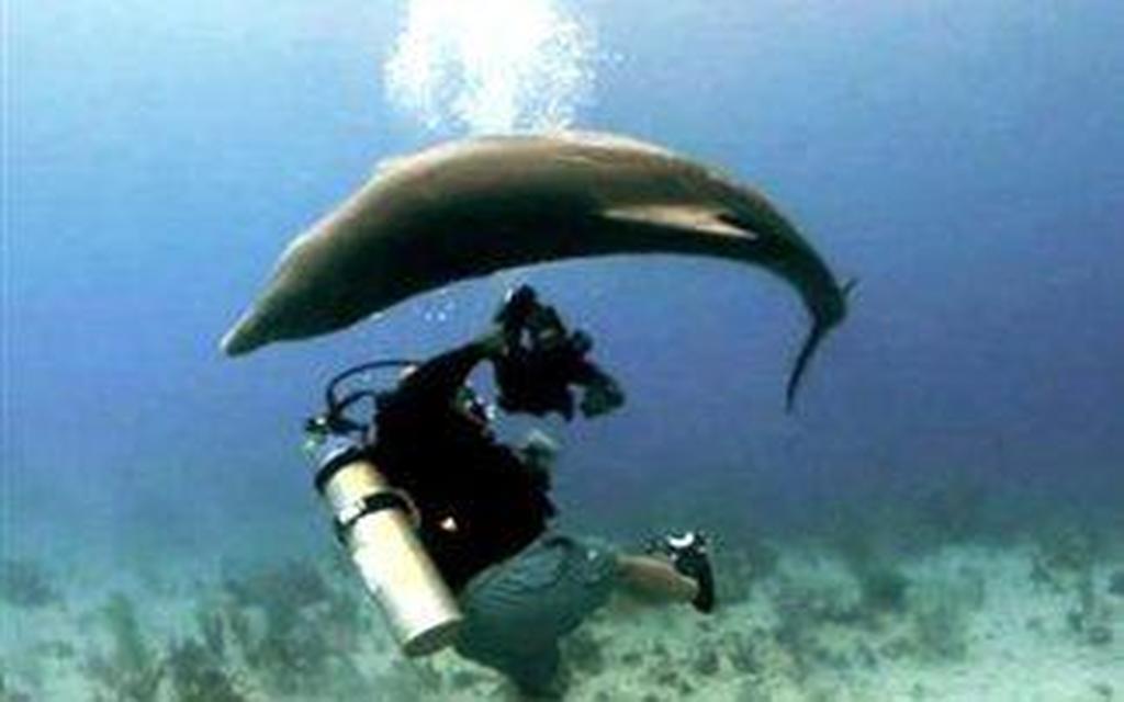 σεξ με ένα βίντεο δελφίνι