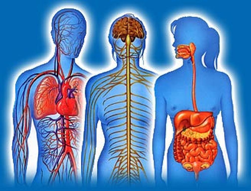 bf9c06fbcf 5 μυστήρια για το ανθρώπινο σώμα