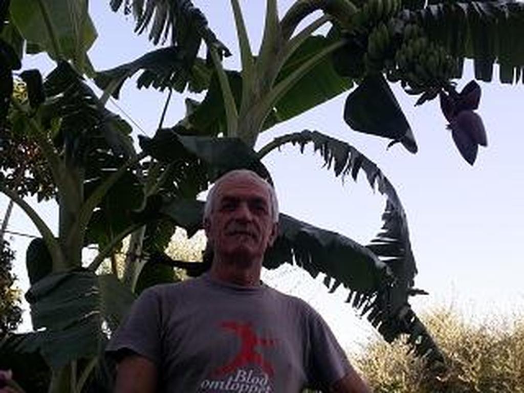 Αχαΐα: 55χρονος από τα Σουδεναίικα παράγει μπανάνες! (pics+video)